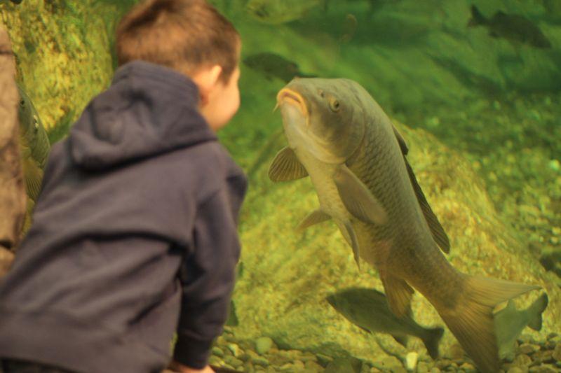 Josh meet mr fish